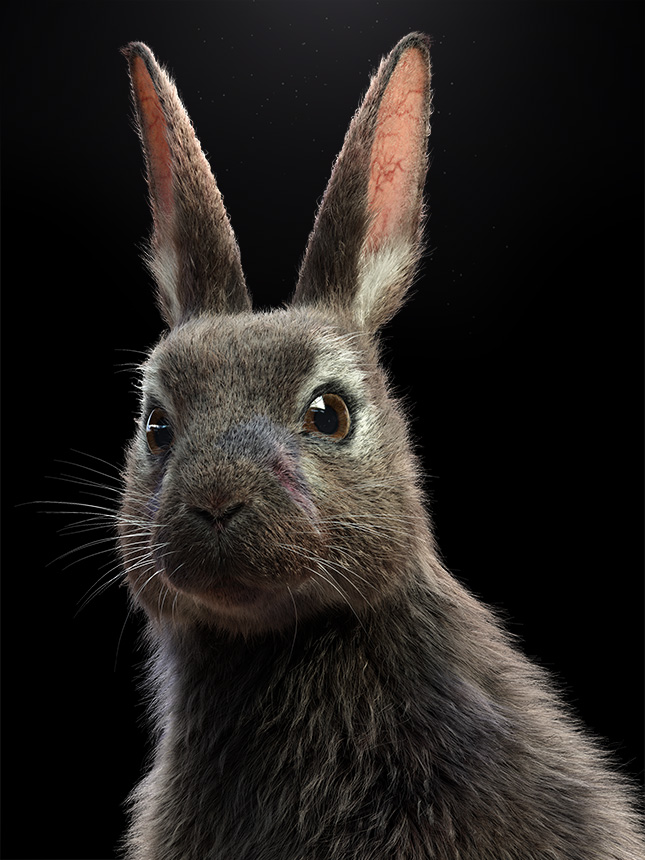 Peta Rabbit Eye to Eye Rendering