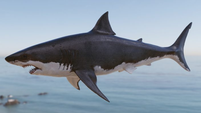 Great White Shark VFX 3D CG